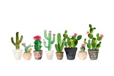 'Cactus' Sticker by BekkaCampbell Cactus House Plants, Buy Cactus, Cactus Art, Cactus Flower, Cactus Decor, Cactus Drawing, Cactus Painting, Silvester Trip, Cactus Stickers