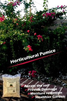 Improve the heath of your plants in your garden by adding a natural mineral to improve the soil, drainage and moisture retention. Garden Soil, Garden Beds, Soil Texture, Pumice, Types Of Plants, Horticulture, Organic Gardening, Container Gardening, Outdoor Gardens