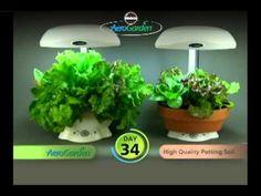 Miracle-Gro AeroGarden 6 Indoor Growing System Review - Walden Labs