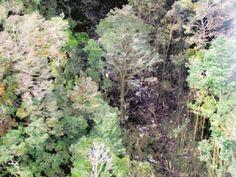 Bangkai pesawat Trigana Air yang terhempas di pergunungan Oksibil - http://malaysianreview.com/139815/bangkai-pesawat-trigana-air-yang-terhempas-di-pergunungan-oksibil/