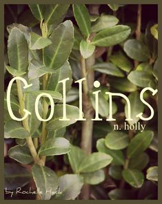 Baby Boy or Girl Name: Collins. Meaning: Holly. Boy Names With J, Trendy Baby Girl Names, Little Boy Names, Names Girl, Baby Boy Or Girl, Baby Names 2018, New Baby Names, Unusual Baby Names, Cool Baby Names