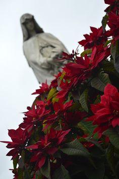 Desiree Fernandez: Cementerio de la Recoleta Buenos Aires