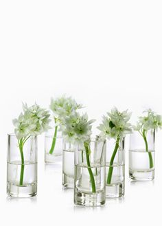 Clear glass cylinder vases that are easy and pretty for groupings of single flower stems, small bouquets. Great for decorative accents or table centerpieces.