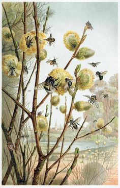 old book illustrations: A spring day in the life of insects. From Brehms Tierleben (Brehm's animal life) vol. by Alfred Edmund Brehm, Leipzig, Vienna, (Source: archive. Illustration Botanique, Botanical Illustration, Illustration Art, Book Illustrations, Spring Images, I Love Bees, Vintage Bee, Bees And Wasps, Images Vintage