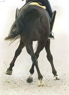 margadirube:  equestriandragon: D r e s s a g e   i s   p e r f e c t i o n .