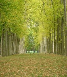 Versailles by janie