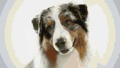 The australian shepherd dog breed has many unique features. Check out the australian shepherd dog breed on Animal Planet's Breed Selector. Australian Shepherds, Australian Cattle Dog, Best Dog Breeds, Small Dog Breeds, Small Dogs, Pet Shop, Dog Breed Selector, Dog Crying, Everything
