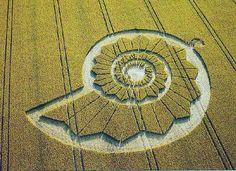 Fibonacci Sequence Crop Circle