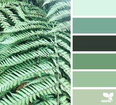 { color frond } image via: @mylamoments #seedscolor #color #colorpalette #color #palette #pallet #colour #colourpalette #design #seeds #designseeds