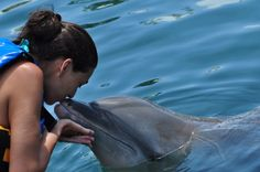 Caribbean swim with dolphins. Family-Friendly Caribbean Shore Excursions: http://travelblog.viator.com/family-friendly-caribbean-shore-excursions/