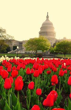 Washington D.C. | Home of Leverage Partner Evers & Co. Real Estate