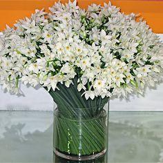 Paper Whites. filler flower (accent)