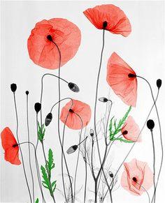 Image: Poppies. (© Arie van 't Riet)