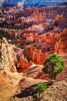 American Landscapes ~ Bryce Canyon, Utah