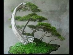 Amazing bonsai trees technology air bonsai 2017 - YouTube