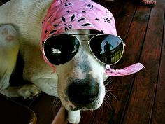 What is You're Soul Animal Quiz>>>>>I got a dog wearing sunglasses Funny Animal Videos, Funny Animal Pictures, Cute Funny Animals, Dog Pictures, Cute Dogs, Animal Pics, Baby Dogs, Dogs And Puppies, Doggies