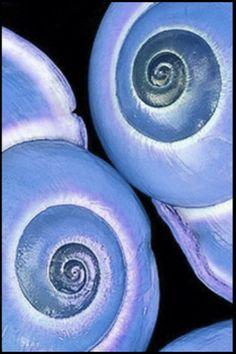 Gotta love the blue!!! Bebe'!!! Love these shells!!!