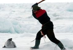HELP PUT AN END TO CANADA'S BARBARIC SEAL HUNT!    People around the world continue to say 'no' to seal products, but the Canadian government stubbornly continues trying to sell these cruel products. They are fighting the EU ban at the WTO and trying to overturn the ban in Russia.  The bans must be defended!  Tell Canada that the seal hunt must end and that you will defend your right to say 'NO' to cruelty!  PLZ Sign & Share!