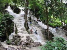"""Sticky Waterfalls - Buathong Waterfalls. About 45 km from Chiang Mai you can visit the Bua Tong Waterfall also referred to as """"Sticky Falls"""" which is popular for its unusual limestone face, arranged in convenient steps, making it possible and safe to climb without too much difficulty. Because the geyser which feeds it, is rich in calcium carbonate, algae growth is prevented on the rocks and so you will have no problems walking on it."""