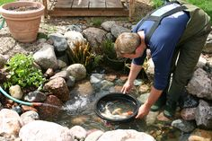 Aquascape is the leading manufacturer of water features, water garden, pondless fountains, and pond products. Get your water feature from Aquascape! Backyard Stream, Backyard Water Feature, Ponds Backyard, Garden Pool, Bog Garden, Pond Cleaning, Spring Cleaning, Pond Maintenance, Goldfish Pond