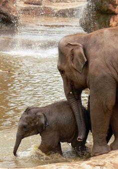 So sweet, mom guiding baby Image Elephant, Elephant World, Asian Elephant, All About Elephants, Save The Elephants, Baby Elephants, Elephant Photography, Animal Photography, Animals And Pets