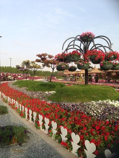 Dubai Miracle Garden, Dubai, UAE . Photographer: Juhaina Al Fardan