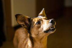 Wie lernen Hunde? Die Antwort auf diese Frage ist die Basis für eine erfolgreiche Hundeerziehung!