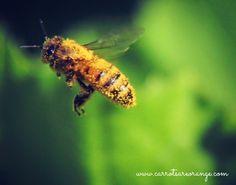 Education Joyeuse*: Les abeilles: introduction