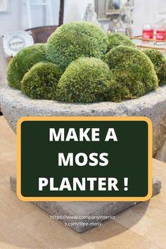 Moss Planters - An Indoor Moss Feature Dish Garden, Garden Tub, Garden Planters, Diy Crafts Materials, Outdoor Topiary, Orchid Planters, Growing Moss, Marimo Moss Ball, Moss Decor