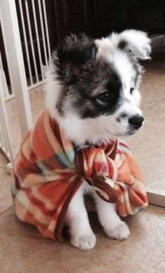 What a cute pup! Super Pup to the rescue. Cute Baby Animals, Animals And Pets, Funny Animals, Small Animals, Small Dogs, Cute Puppies, Dogs And Puppies, Doggies, Collie Puppies