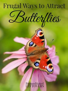 6 Frugal Ways to Attract Butterflies to Your Yard including how to attract butterflies to your garden and attracting butterflies without spending a lot.