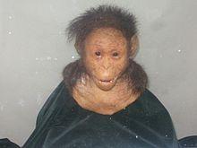 Selam. es el nombre dado a los restos de una hembra de la especie Australopithecus afarensis de 3 años de edad y una antigüedad de 3,3 millones de años, procedentes del yacimiento de Dikika, en el complejo arqueológico de Hadar, en la depresión de Afar del Gran Valle del Rift en Etiopía.
