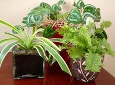 Resultado de imagem para HOUSE PLANTS