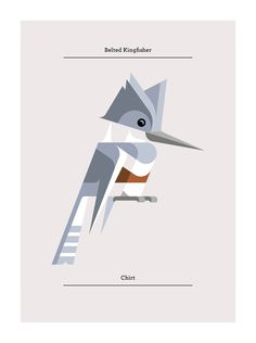 Belted Kingfisher, Flora and Fauna series, Birds edition - Josh Brill
