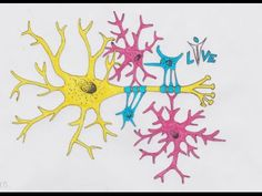 What Is Neuro-Science? The study of neuroscience has expanded to cover medical aspects as well as molecular, cellular, functional, and evolutionary standpoints