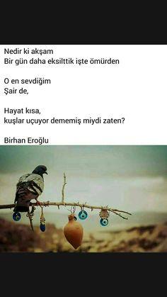 Nedir ki akşam Birhan Eroğlu