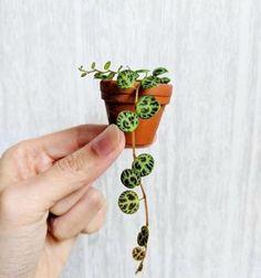 Planting Succulents, Garden Plants, Planting Flowers, Balcony Garden, House Plants Decor, Plant Decor, Paludarium, Cactus Plante, Best Indoor Plants