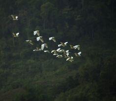 In the jungle by Seksun Oonjitti on 500px