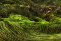 field, Rice Paddy, Terraces, Villages, Hill, Green, Trees, Landscape, Nature