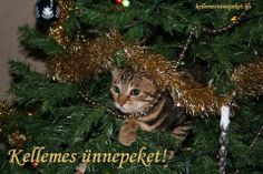 Shop Cat Christmas Tree Invitation created by SplashCache. Dog Christmas Pictures, Christmas Tree Images, Cat Christmas Tree, Christmas Tree Branches, Best Christmas Gifts, Holiday, Cat Climbing Tree, Cute Cats And Kittens, Pet Cats