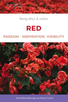 Choosing colors for your home decor? Color can be an impactful way to transform your space and shift your energy, whether you use it in paint or home accessories. In feng shui, red is considered a very auspicious and powerful color, and the most effective color for protection and transforming negative energy. #homedecor #color Feng Shui Colours, School Design, Colorful Decor, Red Color, Home Accessories, Mindfulness, Paint, Space, Colors