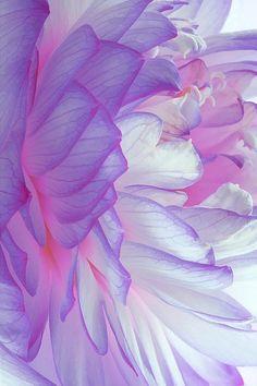 Lavender. queue