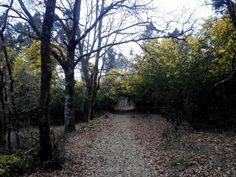 Bosques gallegos con encanto