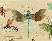 Antique Natural History Print 1899 INSECTS Woodland Forest Illustration - Arthropoda  Cute odonate and orthopterans!