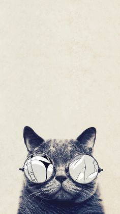 Cat glasses HTC hd wallpaper - High quality htc one wallpapers and abstract backgrounds designed by the best and creative artists in the world.