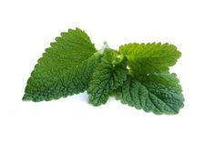 Peppermint (Mentha piperita) essential oil; one of the most popular mint oils used in aromatherapy practice.  Peppermint oil is analgesic, anti-inflammatory, digestive, astringent and antiseptic in aromatherapy use.  Peppermint oil should not be used with babies & young children; other cautions apply too.  For more information, visit: http://www.aromatherapylibrary.com/peppermintessentialoilprofile.html