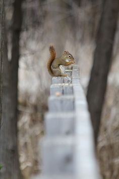 Squirrel in the Fall