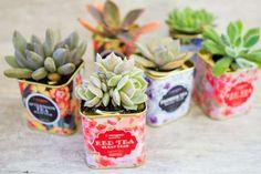 22 idées déco insolites avec des plantes succulentes