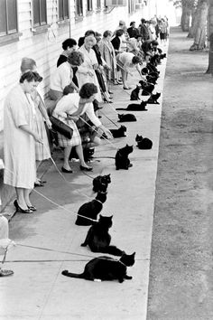onlyoldphotography:  Ralph Crane: Black Cat Auditions In Hollywood, 1961