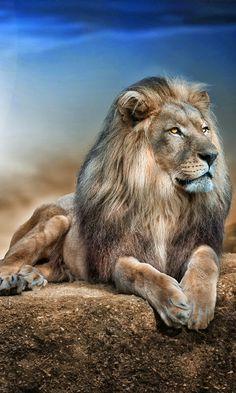Él rey dé la selva                                                                                                                                                      Más